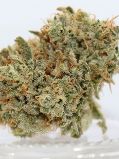 Skunk Brothers - The Most Potent Cannabis